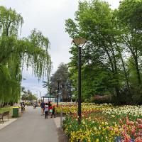 floriade-spring
